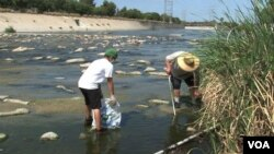 Volonteri čiste reku Los Anđeles