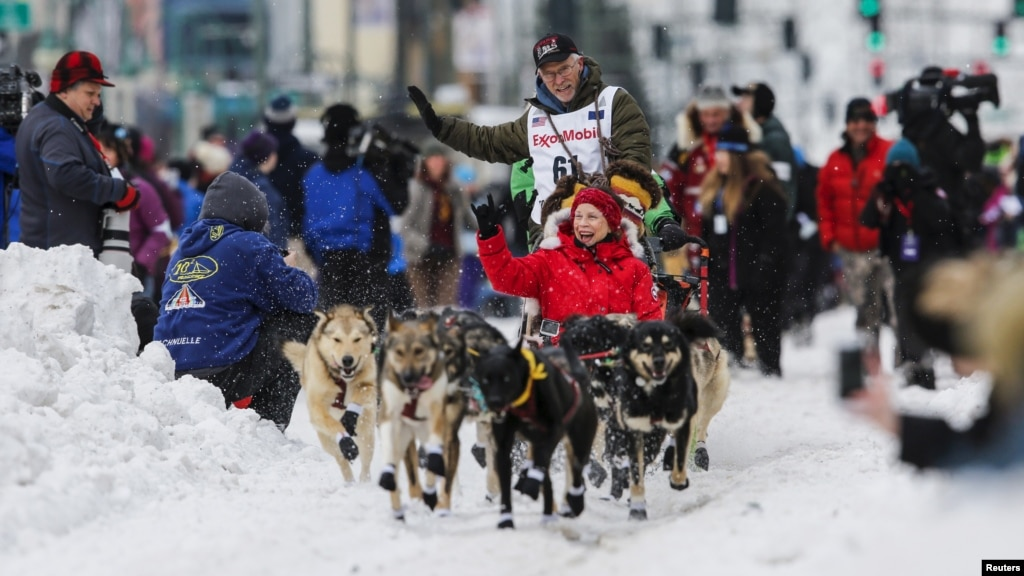 Snowmobile drives into Iditarod teams, leaves one dog dead