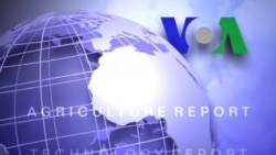 Anh ngữ đặc biệt: Syria Economy (VOA)