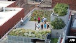 """全美景观设计师协会总部的""""绿色屋顶"""""""