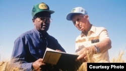 Sanjaya Rajaram, left, and Norman Borlaug work in Mexican wheat fields in this undated photo provided by the International Maize and Wheat Improvement Center (CIMMYT).