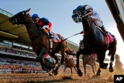 In a close horse race, horses often run neck and neck.