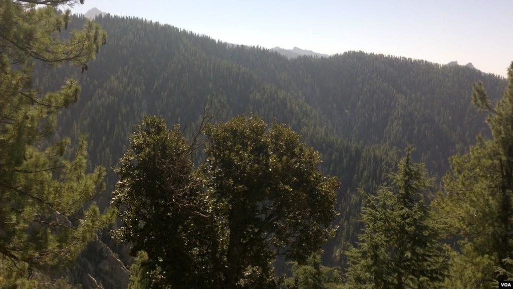 لینک کاوشگر قطع جنگلات در افغانستان ۱۵ درصد کاهش یافته است