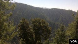 افغانستان در حال حاضر دو درصد ساحۀ سبز دارد