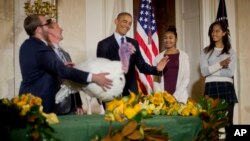 "President Barack Obama, with daughters Malia, far right, and Sasha, carries on the Thanksgiving tradition of saving a turkey from the dinner table by ""pardoning"" a bird named Cheese in the Grand Foyer of the White House, Nov. 26, 2014."