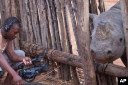 A TV cameraman from an international news channel films a dehorned rhino at the IAPF's Victoria Falls headquarters