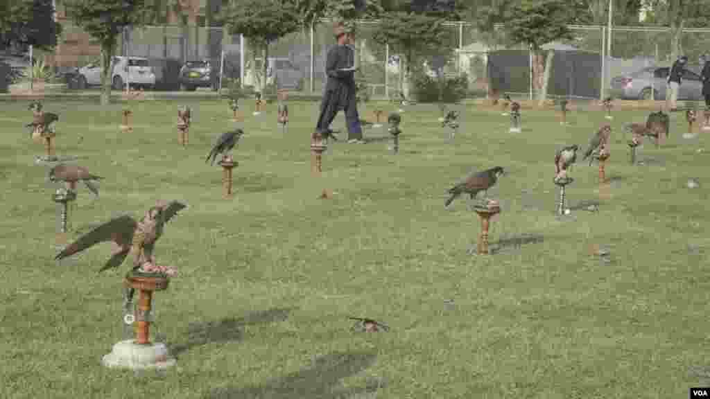 کسٹم حکام کے مطابق یہ نایاب پرندے شکاریوں نے فروخت کیے تھے جنہیں خلیجی ممالک میں اسمگل کیا جانا تھا۔