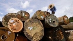 Moçambique assume compromisso de preservar as florestas