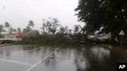 """颶風""""溫斯頓""""吹襲斐濟,一棵樹被吹倒堵塞了道路。(2016年2月20日)"""