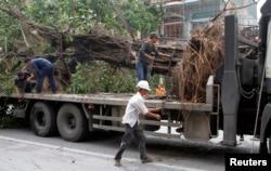 Tuyệt đại đa số các cây đã bị đốn đều là cổ thụ còn sống, không bị bệnh, tức không thuộc diện bị chặt hạ.