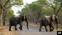 Slonovi u rezervatu u Kini (Foto: AP/Tsvangirayi Mukwazhi)