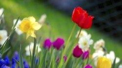 بهار و نوروز در ادبیات پارسی