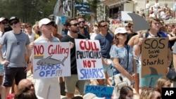 數以千計的澳大利亞人星期六匯集到海灘,抗議通過捕殺鯊魚來減少人被鯊魚襲擊的有爭議政策。