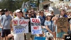 澳大利亚首都悉尼的民众2014年2月1日在曼利海滩,手持标语牌,抗议西澳大利亚州政府捕杀鲨鱼的政策。