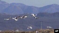 비무장지대 남쪽 철원 계곡 위로 새들이 무리지어 날아가고 있다.(자료사진)