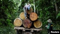 Un agente del Instituto Brasileño del Medio Ambiente y Recursos Naturales Renovables mide un tronco de árbol durante la extracción ilegal y la tala en el municipio de Novo Progresso, estado de Pará, norte de Brasil, el 11 de noviembre de 2016.