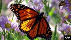 Natyralistët bëjnë përpjekje për shpëtimin e specieve të rrezikuara