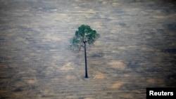 Pemandangan udara menunjukkan sebidang hutan yang gundul di Amazon dekat Porto Velho, Negara Bagian Rondonia, Brazil, 17 September 2019. (Foto: Reuters)