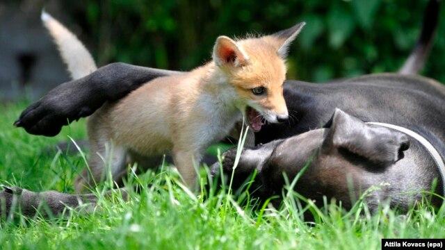 Đa phần trẻ em Việt Nam từ nhỏ đã không được dạy về tình yêu thương động vật. Hình minh họa.