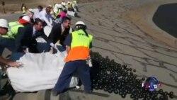 加州抗旱新招:9600万遮阳球护水
