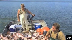 بحرالکاہل میں مچھلیوں کی افزائش گاہوں کو خطرہ