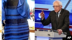 Sen. Bernie Sanders and the Dress