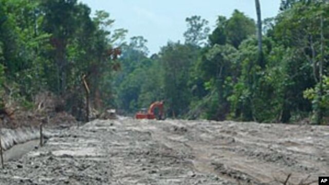 An excavator works amid thick forest in the area PT Kal has slated for conservation, and company heads worry that wide roads like this will kill its chance of selling carbon credits, in West Kalimantan, Indonesia, September 2011.