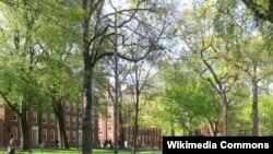 Đại học Harvard Havard