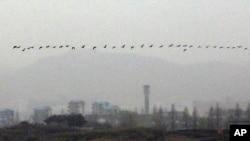 지난 2012년 4월 남북한 비무장지대 주변에서 새들이 줄지어 날고 있다. (자료사진)