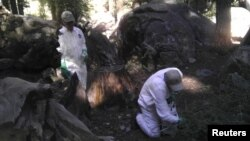 California Department of Public Health workers treat the ground to ward off fleas at the Crane Flat campground in Yosemite National Park, California, Aug. 10, 2015.