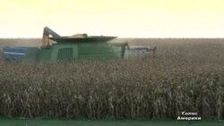 2 тижні без уряду дорого обійшлися фермерам
