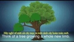 Thành ngữ tiếng Anh thông dụng: Branch out (VOA)
