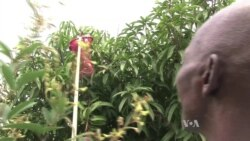 Food Waste in Africa Proves as Devastating as Hunger