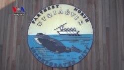 ត្រីបាឡែន គឺជាមច្ឆាដ៏សំខាន់សម្រាប់អ្នករស់នៅក្នុងរដ្ឋ Alaska
