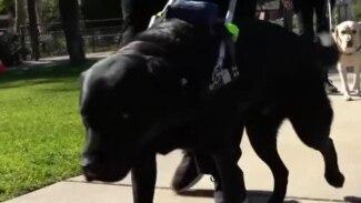 Кучиња водичи - верни партнери на лицата со посебни потреби