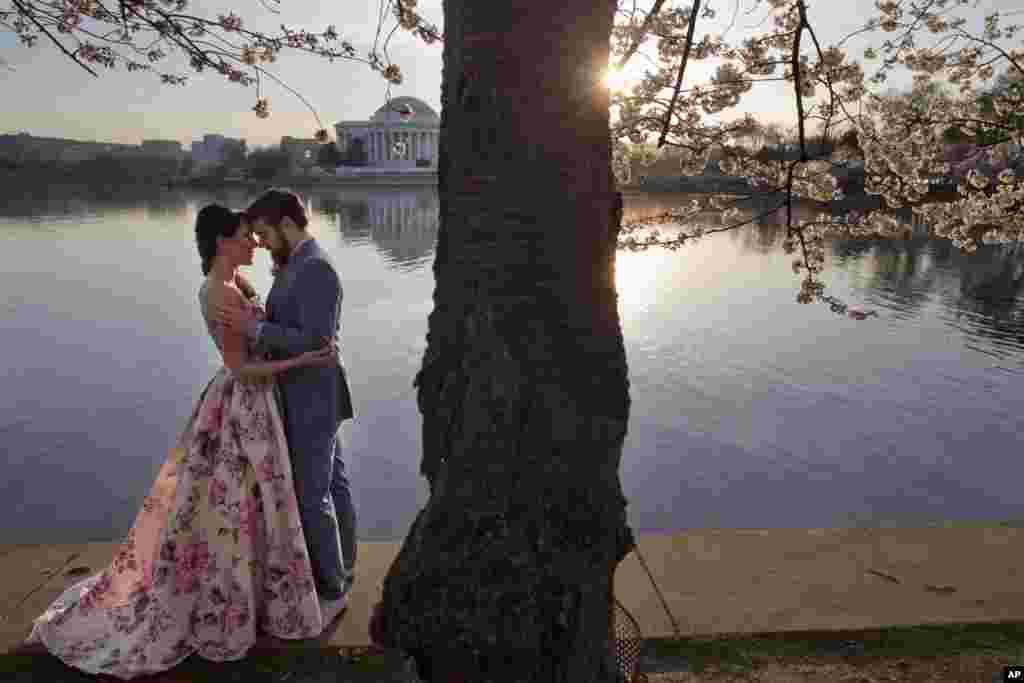 Suzy Dodge (32 tahun) dan Justin Cook (35) melakukan foto pra-nikah (pre-wedding) dengan suasana bunga Sakura yang mekar di kawasan Tidal Basin, Washington DC.