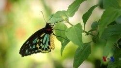 走进美国:彩蝶飞舞的世外桃源