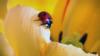 Kerumunan Kumbang Kepik dalam Jumlah Besar Terdeteksi di Radar di California