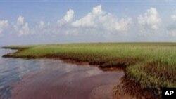 墨西哥湾泄漏的原油污染了路易斯安那海岸