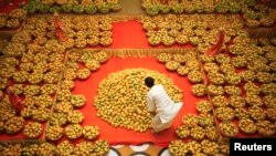Food of the Gods. A Hindu priest arranges mangoes to be offered to Hindu God Lord Krishna inside a temple during a mango festival in India. THAT is how important mangoes are.