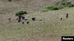 North Koreans farm in the field, along the Yalu River, North Korea. A UN agency says drought may be the cause of increased treatment for malnutrition in the country.