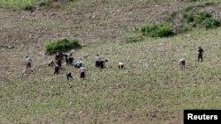 지난달 20일 북한 평안북도 석주군 압록강변에서 주민들이 밭일을 하고 있다. (자료사진)