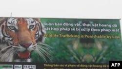 """Biển quảng cáo lớn bằng tiếng Việt và tiếng Anh trên đường từ Sân bay Quốc tế Nội Bài về Hà Nội, với cảnh báo: """"Buôn lậu động vật hoang dã sẽ bị xử lý theo pháp luật"""""""