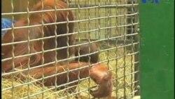 بازدید از یک باغ وحش با گونه های در حال انقراض