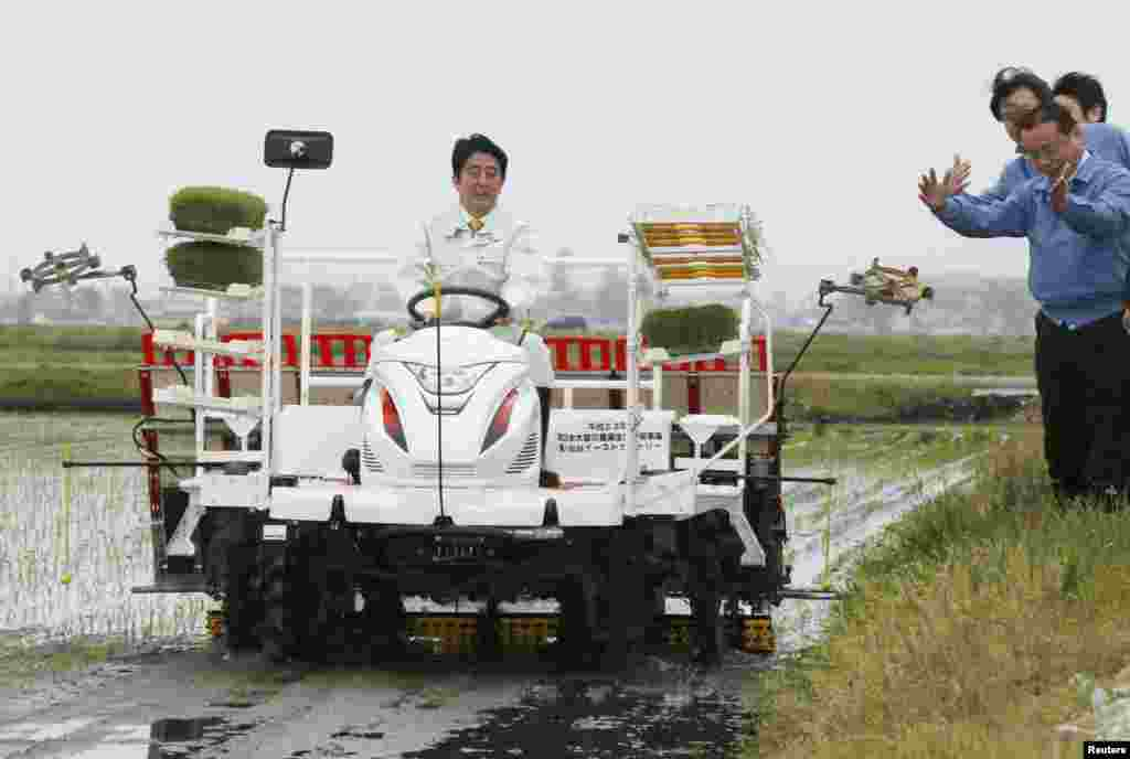 Japan's Prime Minister Shinzo Abe drives a rice planting machine at a paddy field in Sendai, Miyagi prefecture, in this photo taken by Kyodo.