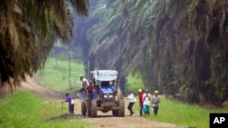 Workers arrive at a plantation in Kinabatangan in Malaysia's state of Sabah on the Borneo island. (File Photo)