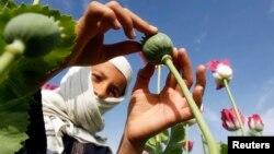 U.S. Counternarcotics In Afghanistan