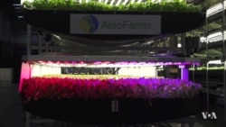 Indoor Farming Growing Sharply