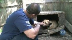 Жорстоке ставлення до тварин відтепер кримінальний злочин у США. Відео