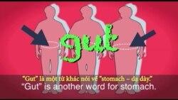 Thành ngữ tiếng Anh thông dụng: Gut Feeling (VOA)